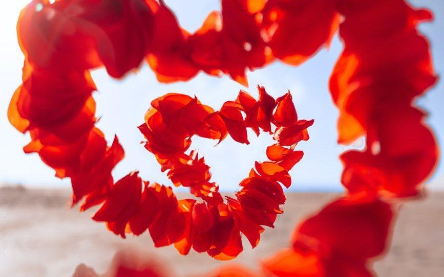 red flower on white sand amor não é suficiente no psico.online confira o post.